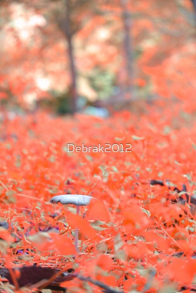 Focus  by Debrak2012