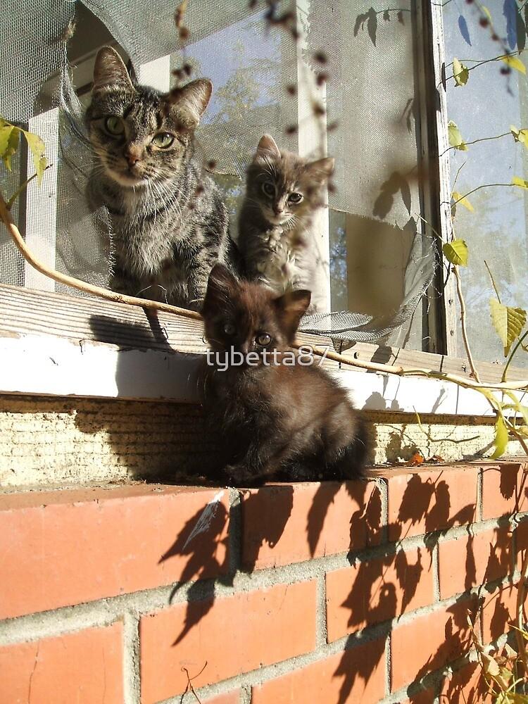 Kitties by tybetta87