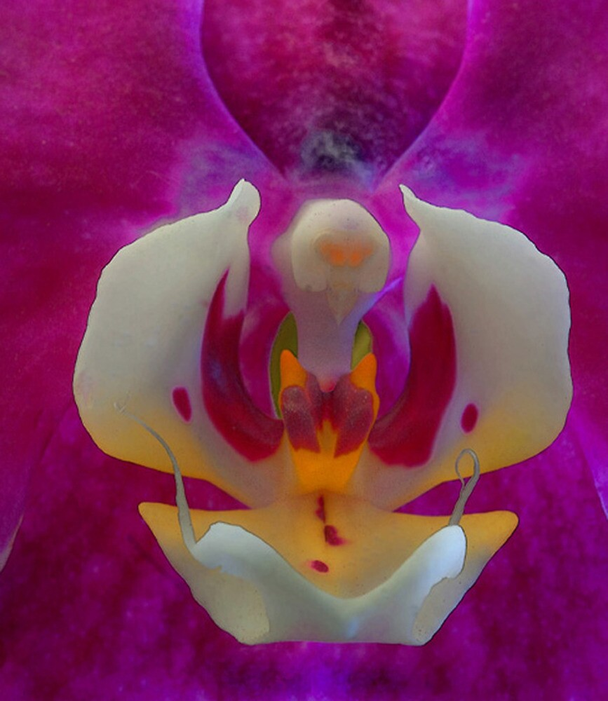 Orchid Face by Floyd Hopper