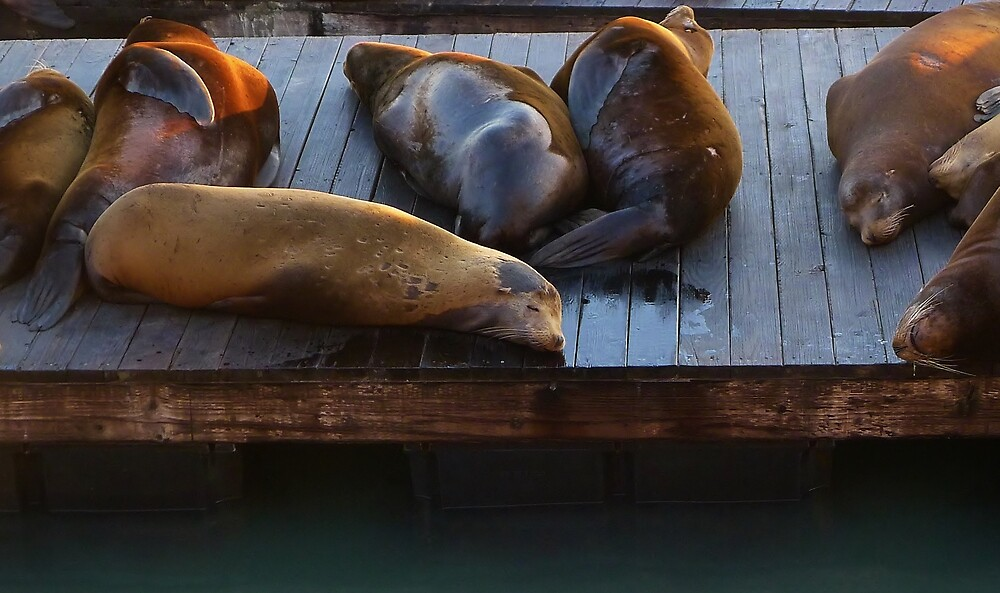 Sleeping Seals by Barbara Morrison