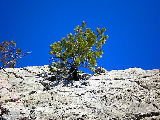 WALNUT CANYON NATIONAL MONUMENT ARIZONA MARCH 2007 by photographized