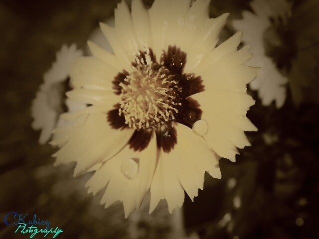 Yellow Flower by clkimage