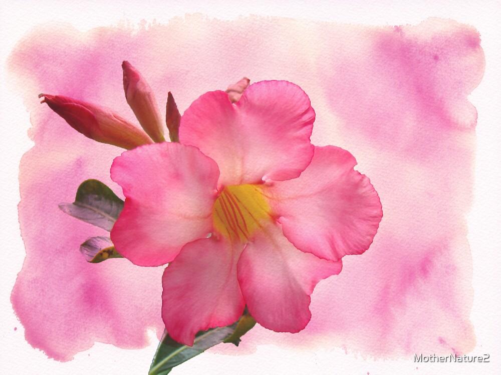 Hot Stuff - Pink Mandevilla Vine by MotherNature2