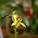 orchidée by Luis Alberto Landa Ladron de Guevara