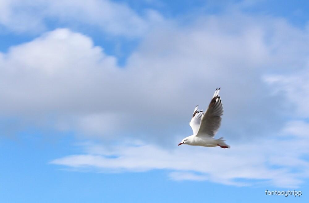 Seagull flying in sky by fantasytripp