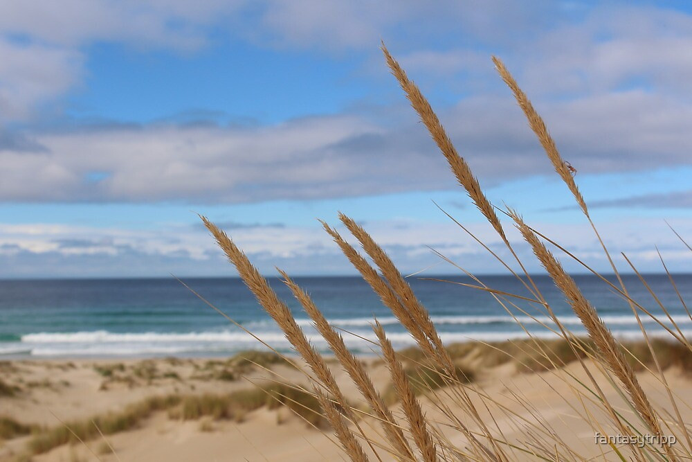 Photo of Grass at Peron Dunes, East Coast Tasmania by fantasytripp