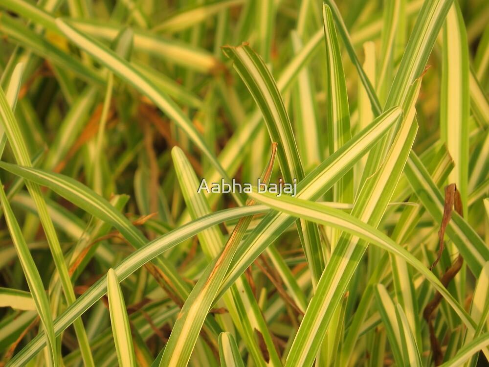 Bicolored grass ! by Aabha bajaj