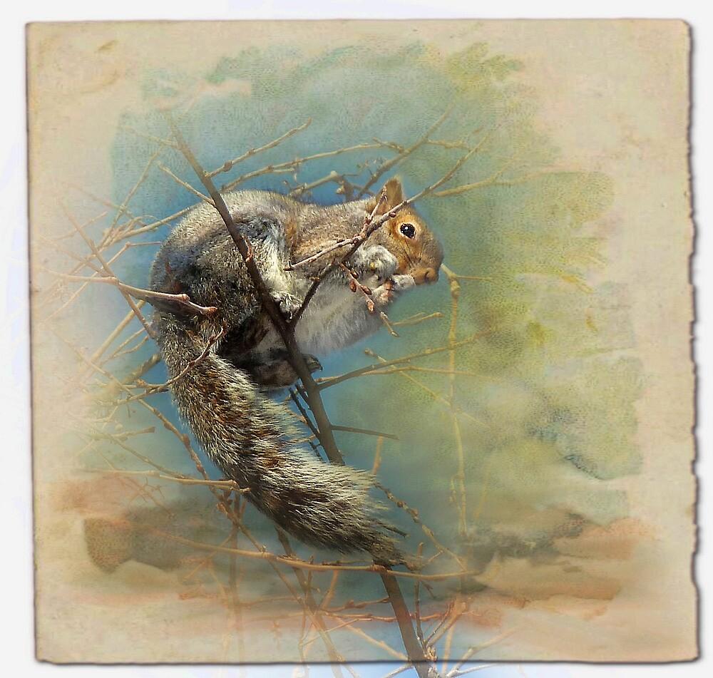 Squirrel by sunshine65