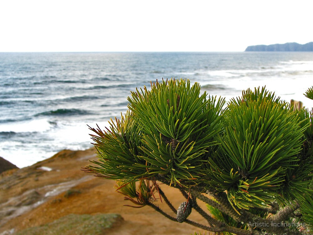 Sea Pine by Artistic Inclinations