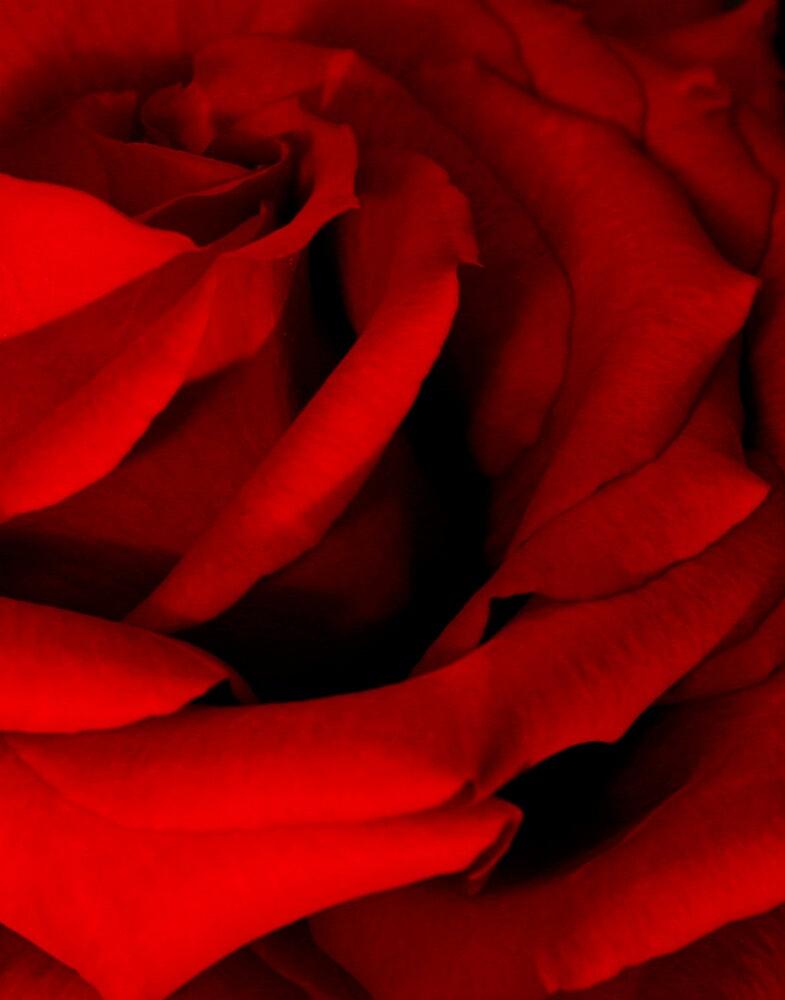 Red Red Rose by Karen Harrison