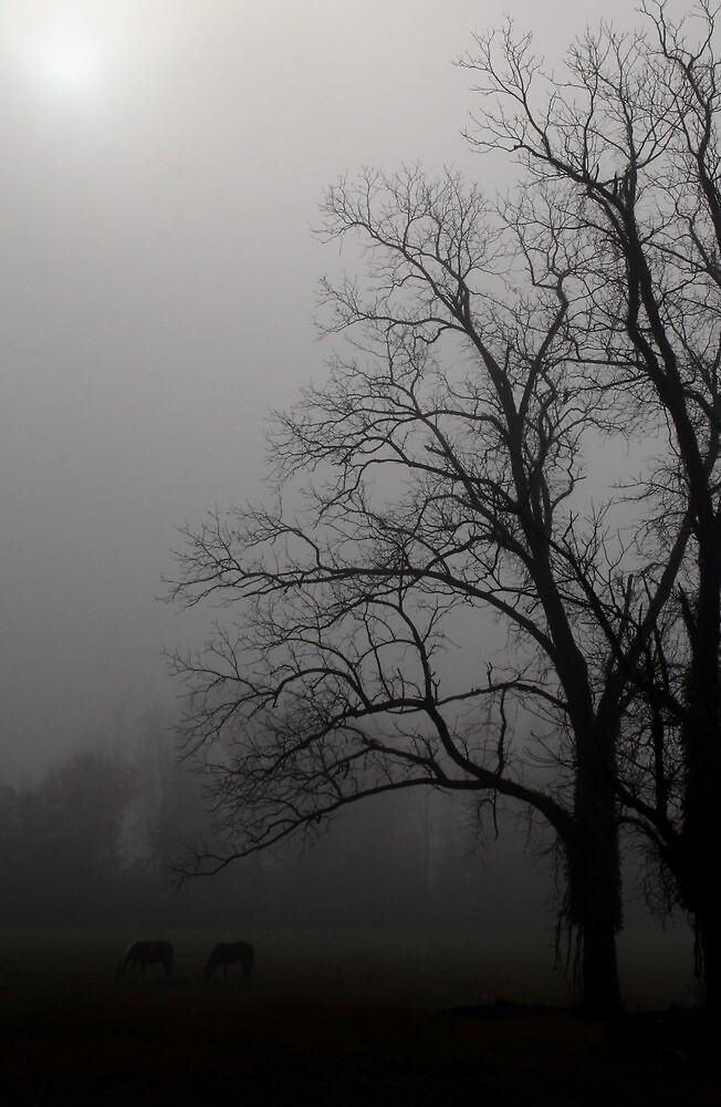 Misty Morning by Karen Harrison