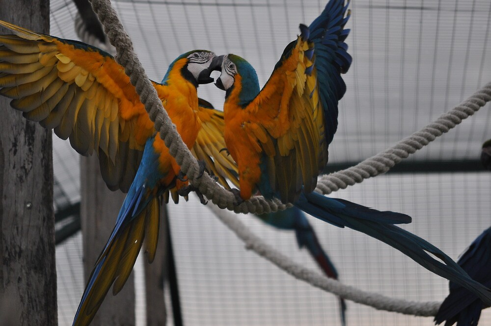 a couple of parrots at the zoo by mitse5786