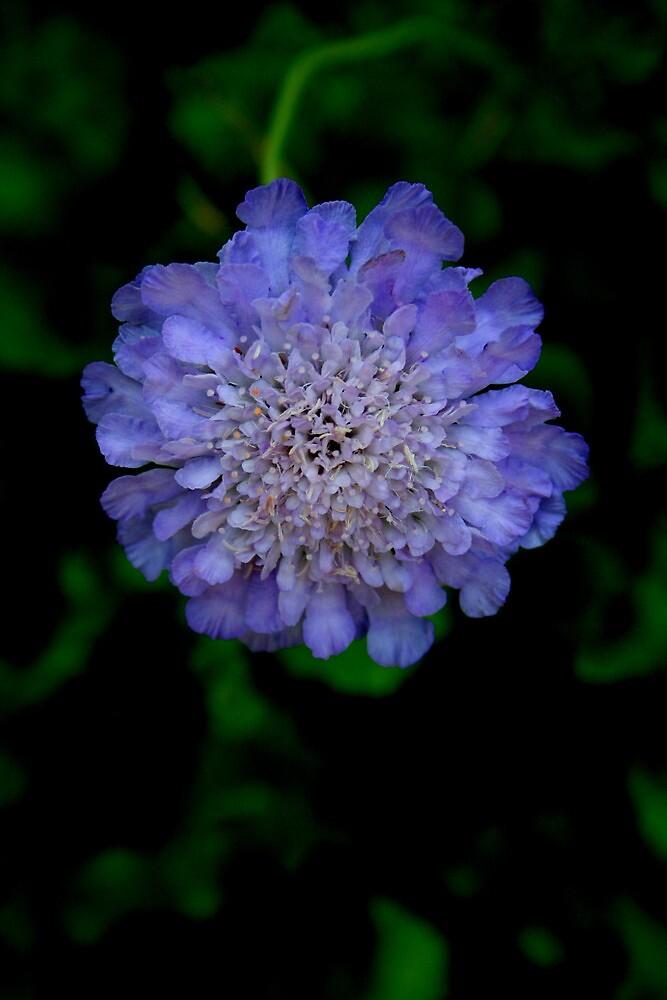 Blue Flower by Karen Harrison