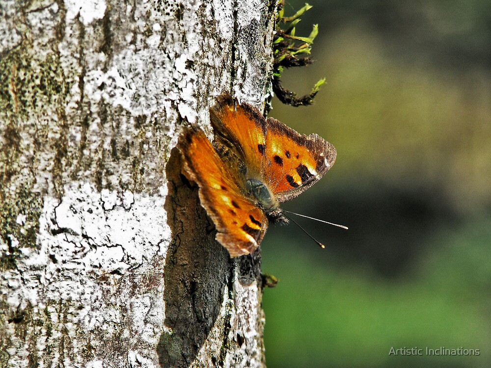 Moth & Tree by Artistic Inclinations