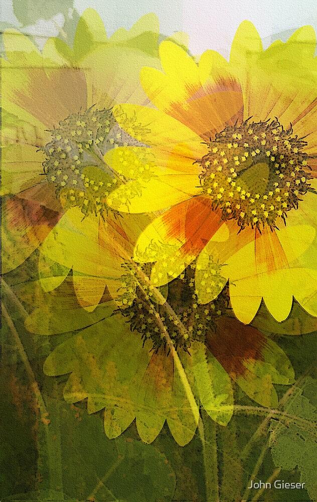 Mini Sunflowers by John Gieser