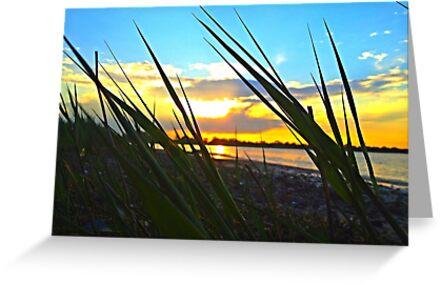 sunset through grass by Irina93