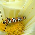 Moth and Chrysanthemum by Mattie Bryant