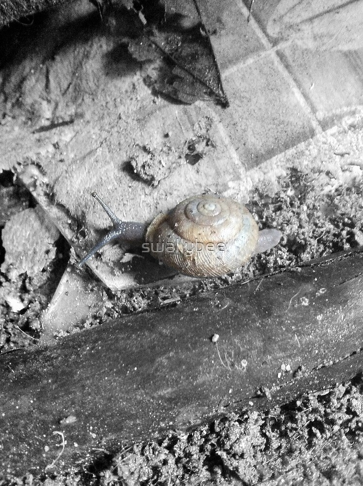 Patio Snail by swallybee