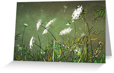 Queen Anne's Lace 14 by Suzanne Clements