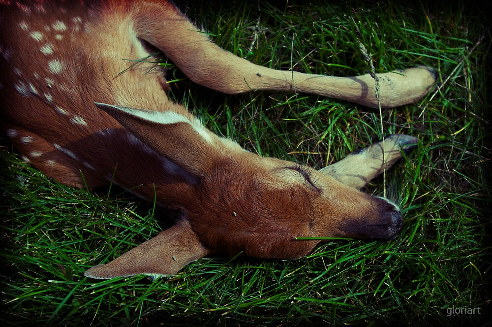Dying Fawn by gloriart