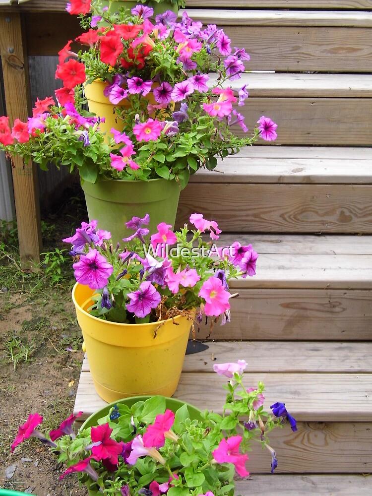 Pots Of Flowers by WildestArt