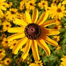 SUN-SATIONAL by Elizabeth Burton
