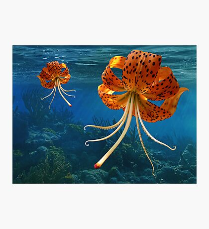 Octo-Flower Jelly-Pus Photographic Print