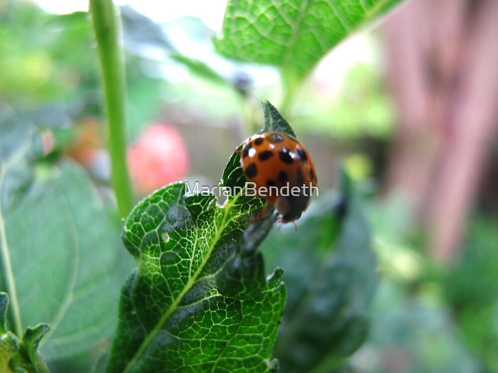 Little Ladybug by MarianBendeth