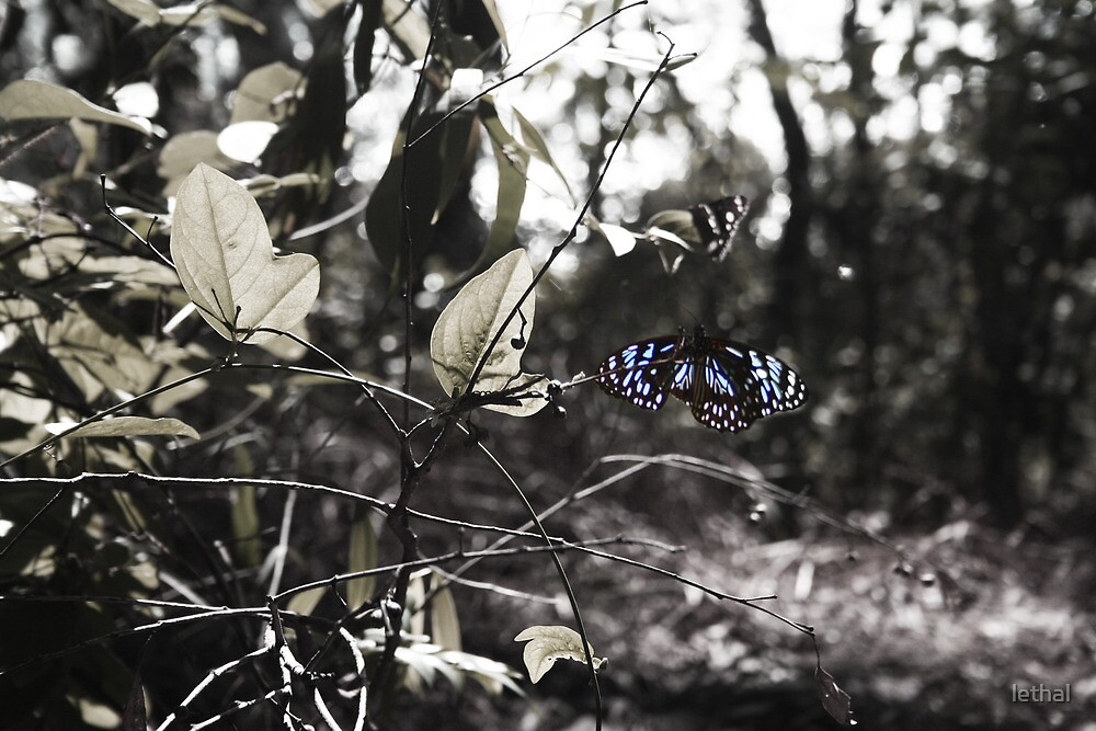 butterfly by lethal