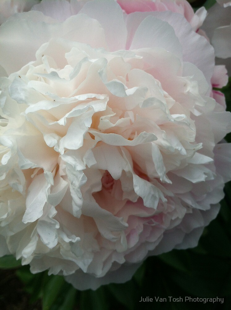 Peony preparing for the morning by Julie Van Tosh Photography