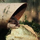 Otter's Pipe by WilMorris