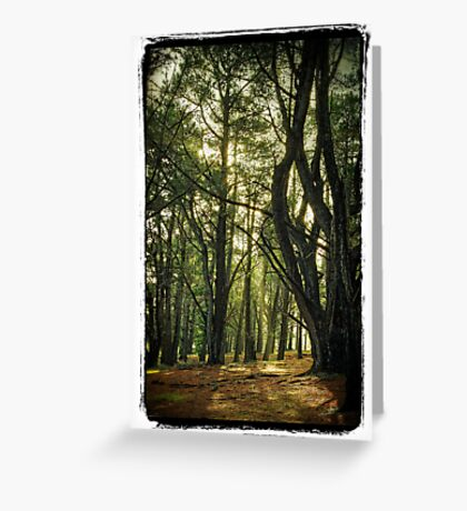 Forest Glen Greeting Card