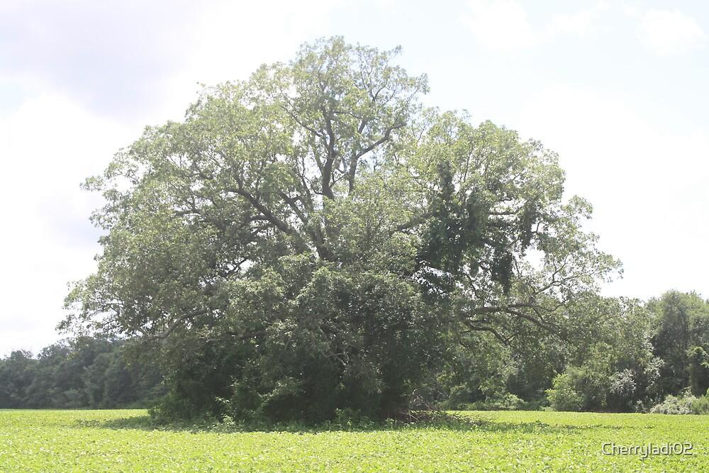 """Neat"" tree III by Cherryladi02"