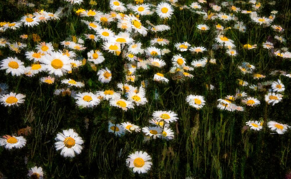 Dream Daisies  by Wib Dawson