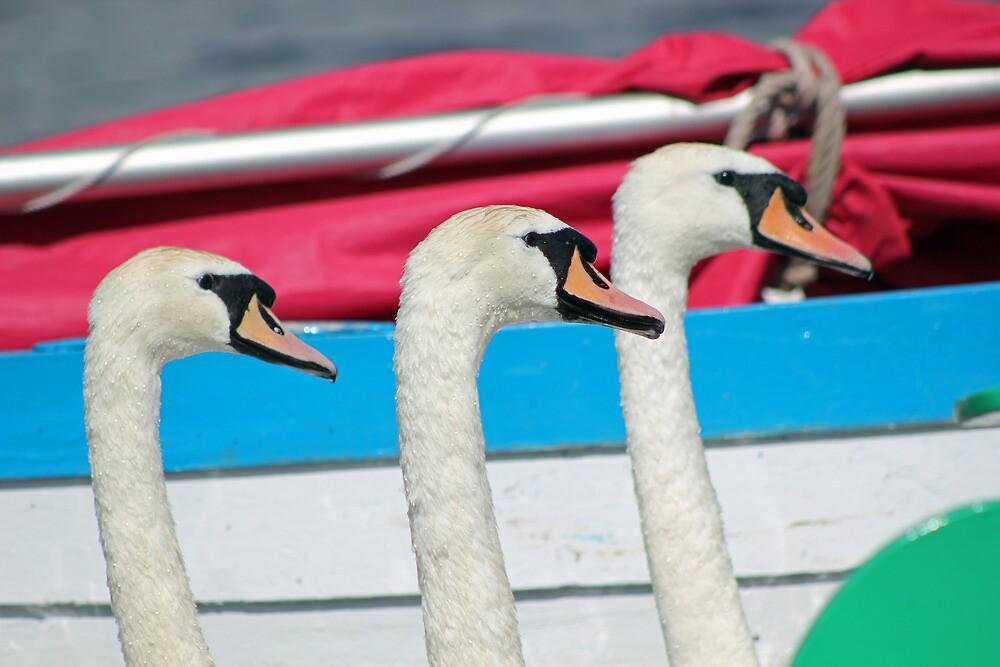 Three Swans by AndyLanhamArt