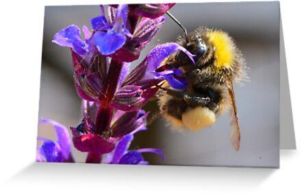 Bumble Bee by wraysburyade