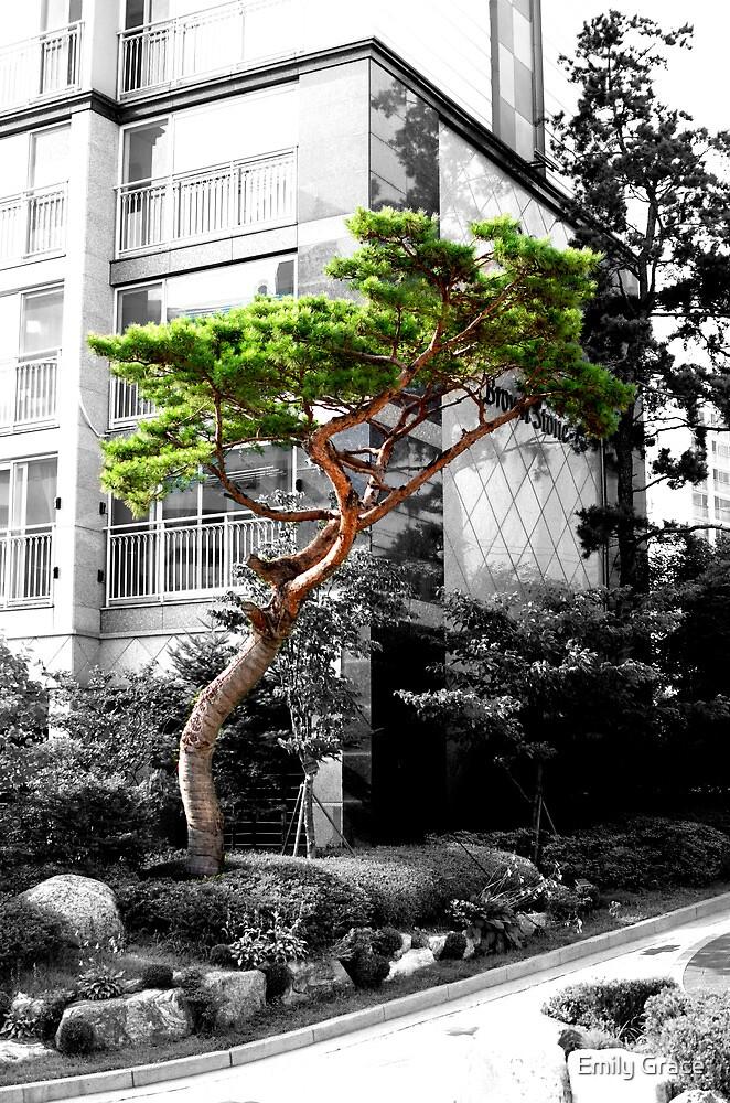 Bonsai by Emily Grace