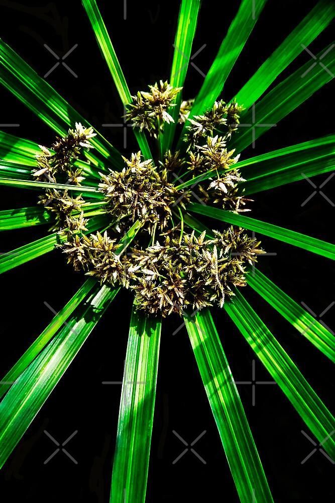 Green Flash by Heather Friedman