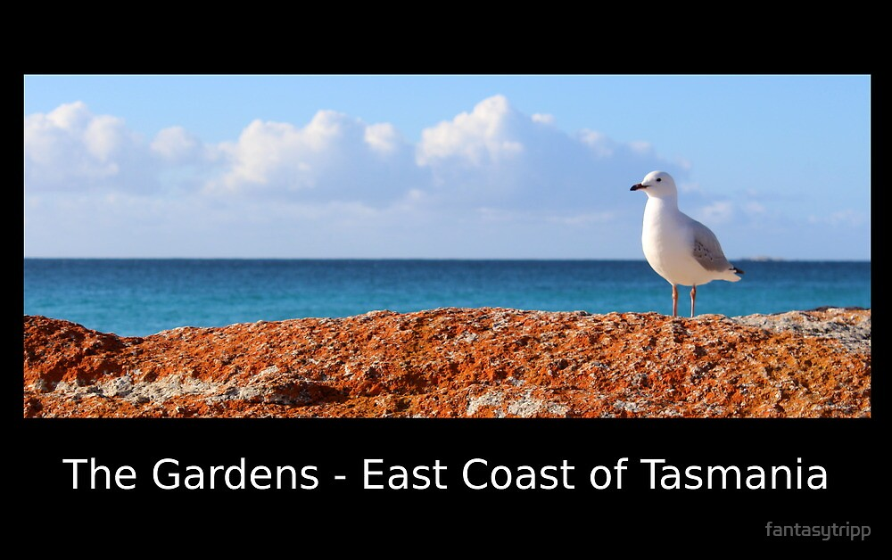 Seagull at The Gardens - East Coast Tasmania Postcard by fantasytripp