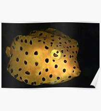 Yellow Boxfish Poster