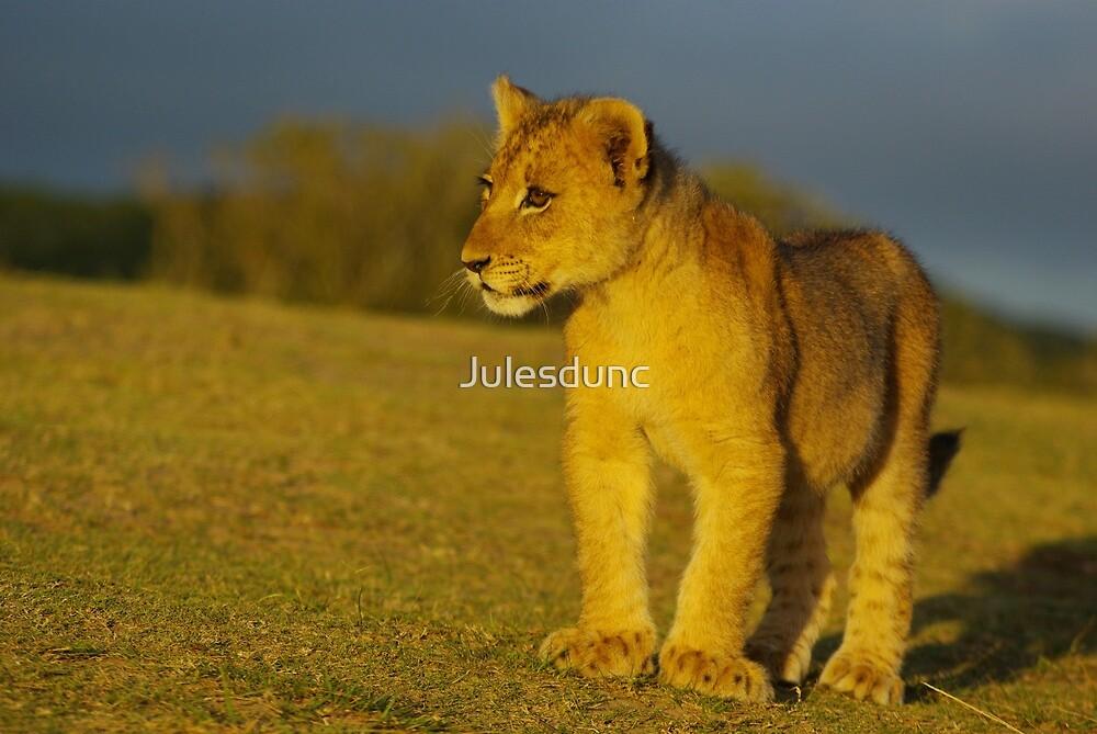 baby lion by Julesdunc