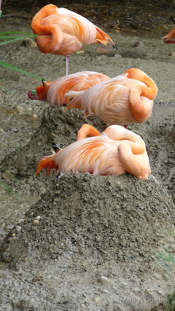 NESTING FLAMINGOES by Marilyn Grimble