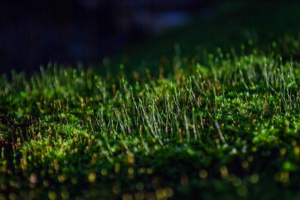 moss by tonysphotospot