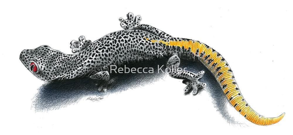 Golden tailed gecko by Rebecca Koller