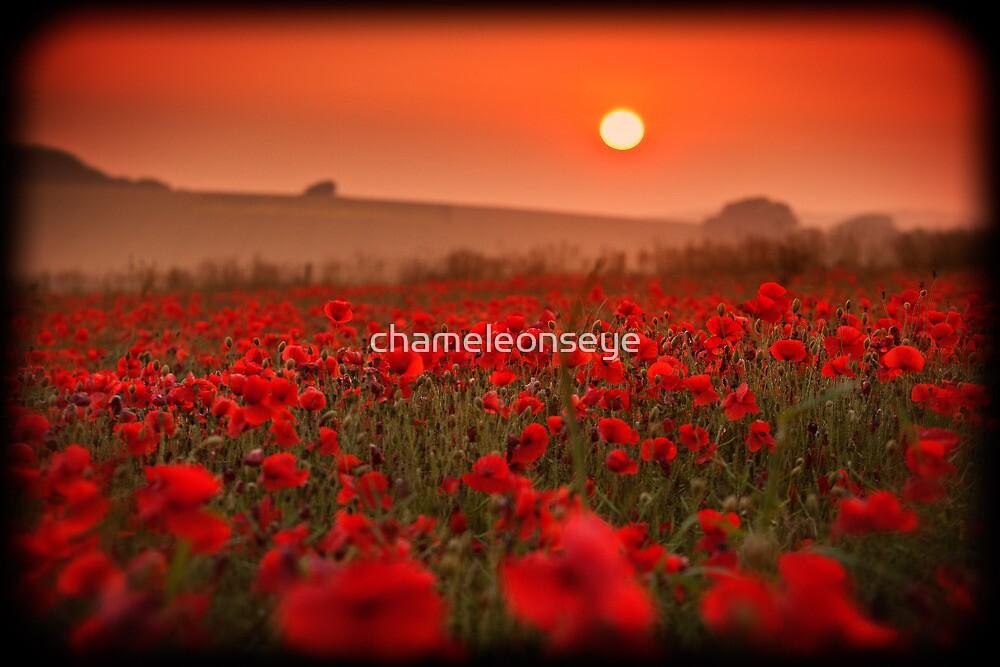 The Poppy Field by chameleonseye