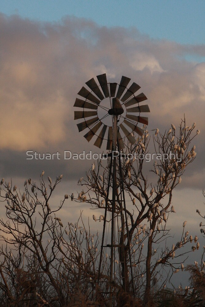 Windmill and Wildlife by Stuart Daddow Photography