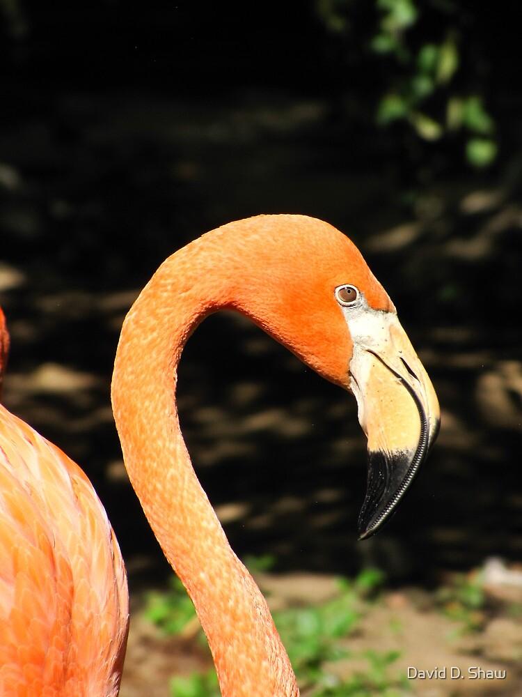 Flamingo by David Shaw