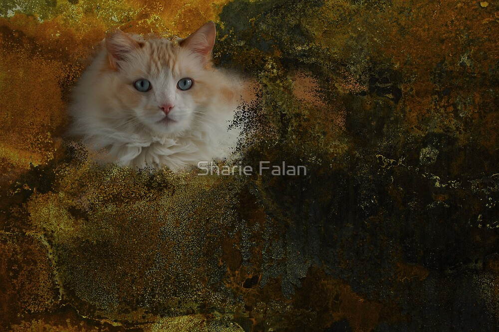 Ragdoll cat-Inky Dinky by Sharie Falan