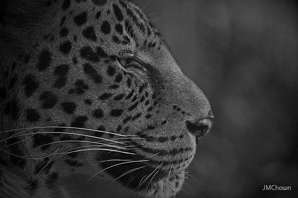 African Leopard Portrait by JMChown