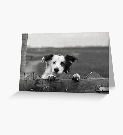 Guarding the fence Greeting Card